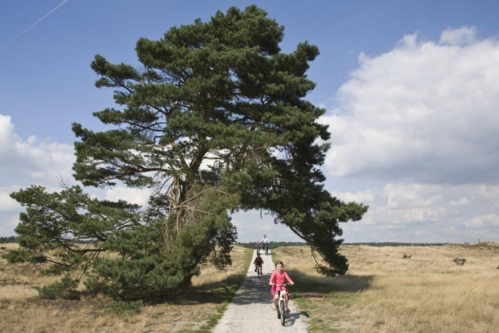 Boom_met_overhangende_takken_over_een_gedeelte_van_het_fietspad,_met_fietsers_-_Unknown_-_20528211_-_RCE